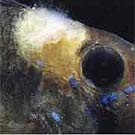 Случайные фото.  На фотографии - рыба с грибковым заболеванием (выглядит...