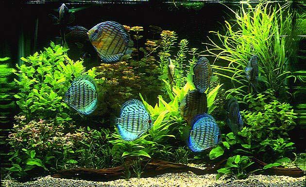 Содержание аквариума уход за рыбами 76