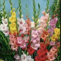 Бисероплетение цветы гладиолусы - Лучшие изделия из бисера только здесь.