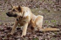 Блохи у домашних животных в Барнауле.