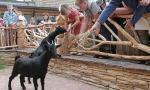 """Особенность  """"контактного зоопарка """" в том, что посетители могут самостоятельно  """"познакомиться """" с его обитателями..."""